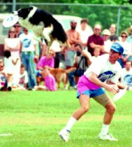 Frisbee Dog Team - Chuck and Flash